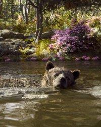 Box-office : Le Livre de la Jungle démarre sur les chapeaux de roue