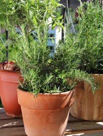 Comment cultiver des plantes aromatiques sur son balcon ?