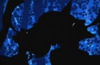 Les Contes de la nuit - bande annonce - (2011)