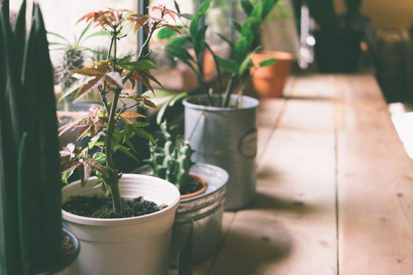 Des plantes dépolluantes pour assainir son intérieur.