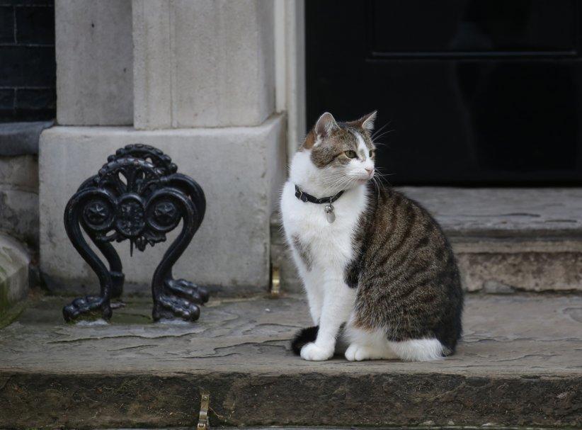 Le chat Larry devant l\