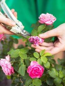 Comment préparer son jardin au printemps ?