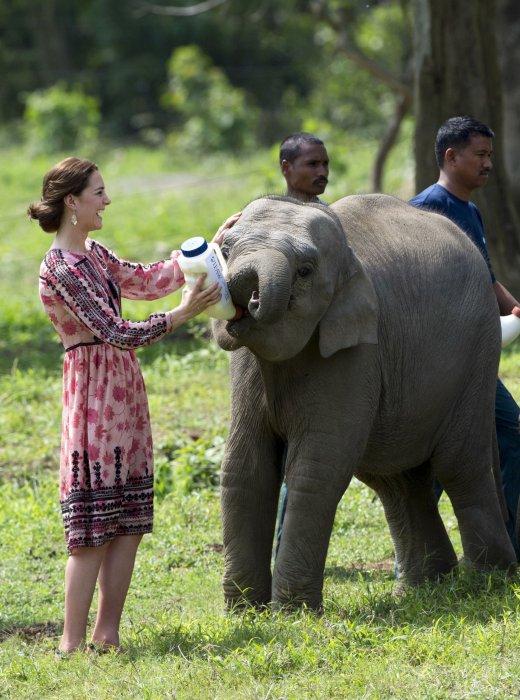 Kate Middleton en voyage officiel en Inde