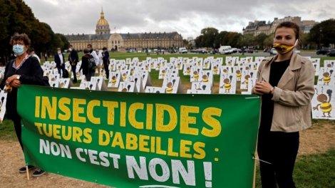 Morts d'abeilles : les néocotinoïdes de retour à l'Assemblée nationale