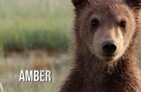 Grizzly - bande annonce 2 - VF - (2014)