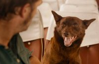 Red Dog - bande annonce 2 - VF - (2011)