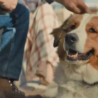 A Dog's Journey - Bande annonce 1 - VO - (2019)