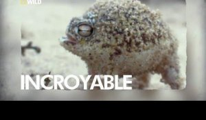 Une grenouille incroyable !