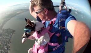 Crasha - The Skydiving Dog - Swoopware Skydive