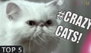 Top 5: Crazy CATS commercials!