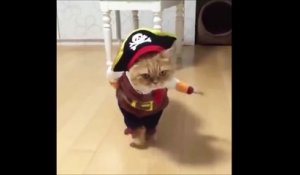 Le chat pirate le plus mignon de la journée!