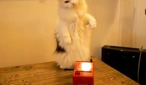Un chat s'amuse avec un theremin