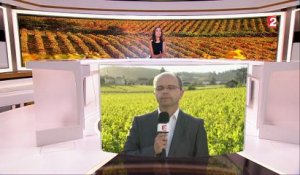 Vignobles : la production en baisse