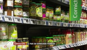 "Agriculture : la renaissance du cornichon ""made in France"""