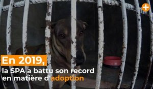 La SPA bat son record avec 43 000 adoptions en 2019