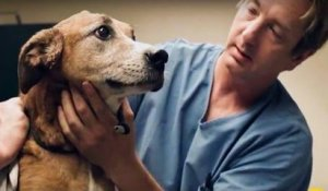 Horribly mistreated dog finds a new home