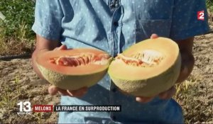 En surproduction, la France ne sait plus que faire de ses melons