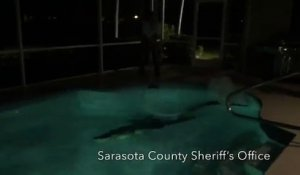 Un alligator s'invite dans la piscine familiale - VIDEO