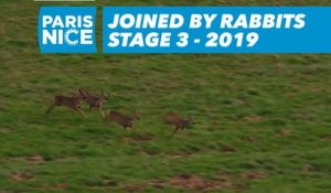Joined by rabbits   - Étape 3 / Stage 3 - Paris-Nice 2019