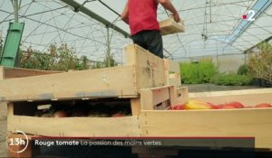 Feuilleton : Rouge tomate (2/5)