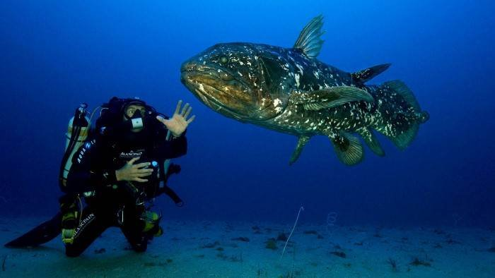 Le coelacanthe
